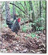 Farmyard Life With The Hens Canvas Print