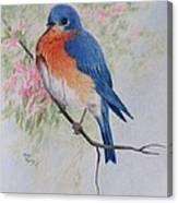Fat And Fluffy Bluebird Canvas Print