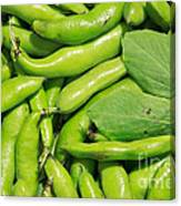 Fava Bean Pods Canvas Print