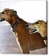 Fawn Greyhound Dogs Profile Canvas Print