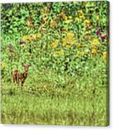 Fawn In Flowers Canvas Print