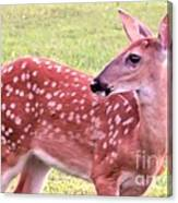 Fawn In The Waning Summer Canvas Print