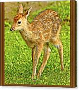 Fawn Poster Image Canvas Print