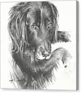 Black Dog Laying Pencil Portrait Canvas Print