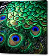 Feather Abstract Canvas Print