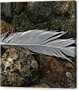 Feather And Rocks Canvas Print