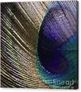 Feather Fan Canvas Print