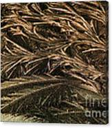 Feather Ice 2 Canvas Print