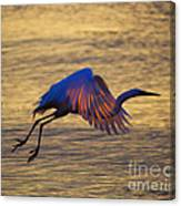 Feather-light Canvas Print