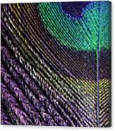 Feather Of A Different Color Canvas Print