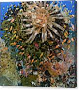 Feather Star (crinoidea Canvas Print