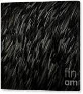 Feather Texture Canvas Print