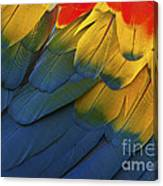 Feathery Details... Canvas Print