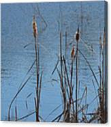 February Cattails Canvas Print