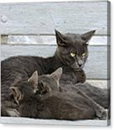 Feeding The Kittens Canvas Print