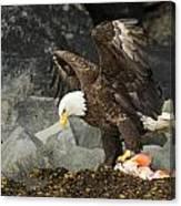 The Ultimate Bald Eagle Canvas Print