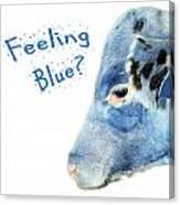 Feeling Blue Calf Canvas Print