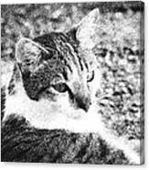 Feline Pose Canvas Print