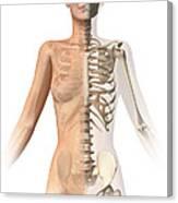 Female Body With Bone Skeleton Canvas Print