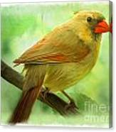 Female Cardinal In Elm Tree - Digital Paint Canvas Print