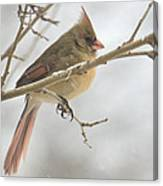 Female Cardinal In Snow 02 Canvas Print