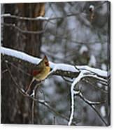 Female Cardinal In Snow Canvas Print