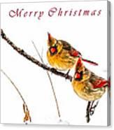 Female Cardinals Card Canvas Print
