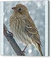Female House Finch In Snow Canvas Print