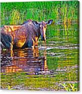 Female Moose Near Airport In Chicken-alaska   Canvas Print