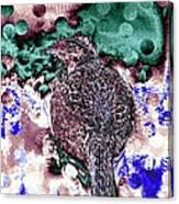 Female Pheasant Abstract Canvas Print
