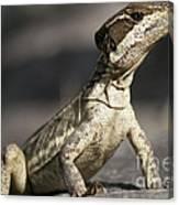 Female Striped Lizard Canvas Print