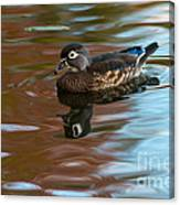 Female Wood Duck In Fall Colors Canvas Print