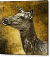 Female Yellowstone Elk Canvas Print