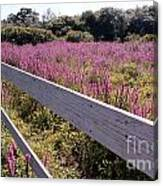 Fence And Purple Wild Flowers Canvas Print