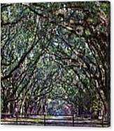 Fence And Wormsloe In Savannah  Canvas Print