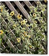 Fence Lined Wildflowers Canvas Print