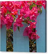 Fence With Bouganvillia Canvas Print