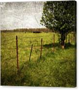 Fence With Tree Canvas Print