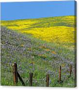 Fenced In Flowers Canvas Print