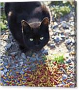Feral Learning Trust Canvas Print