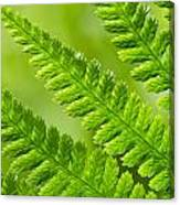 Fern Abstract Canvas Print