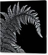 Fern At Night Canvas Print
