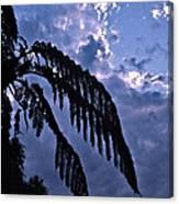 Fern At Twilight Canvas Print