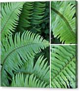 Fern Collage Canvas Print