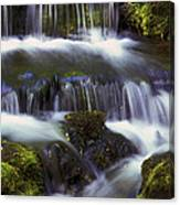 Fern Falls - 31 Canvas Print