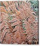 Fern Frond Frosted Canvas Print