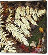Fern In The Forest Canvas Print