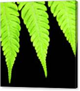 Fern Isolated On Black Background Canvas Print