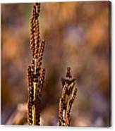 Fern Spore Stalk In Morning 2 Canvas Print