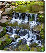 Fern Spring In Spring In Yosemite Np-2013 Canvas Print